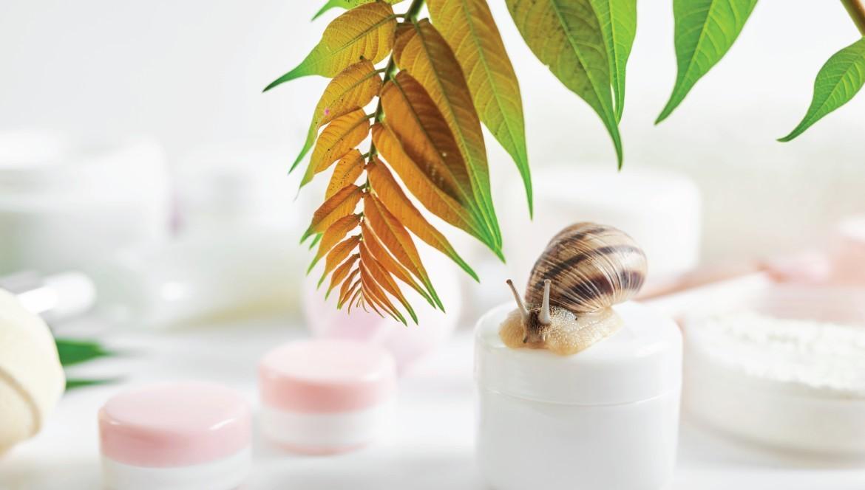 Bava di lumaca: Un concentrato di sostanze nutritive
